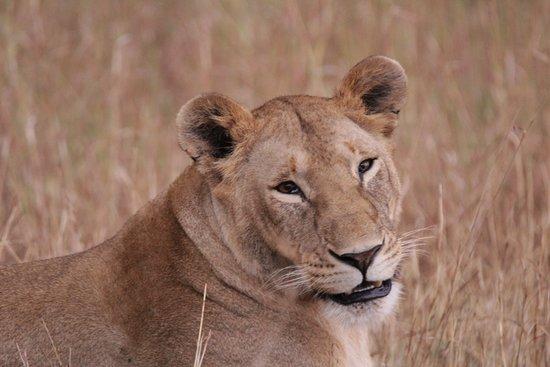 Sima Safari Limited