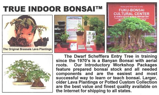 Kurtistown, HI: This composite photo introduces us. We lead the this easy-care specialty form of bonsai.