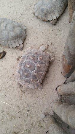 Val de Reuil, France : tortues de terre
