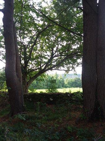 Topsmead State Forest Φωτογραφία