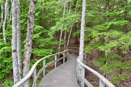Kejimkujik National Park, Canada: Boardwalk near visitor centre