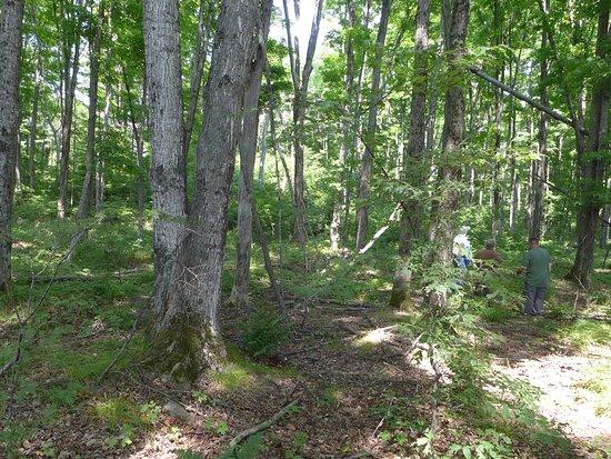 Seney, MI: Hiking the trail.