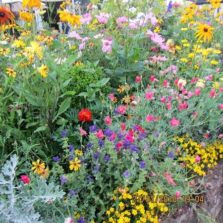 Pant Yr Ochain: beautiful flowers