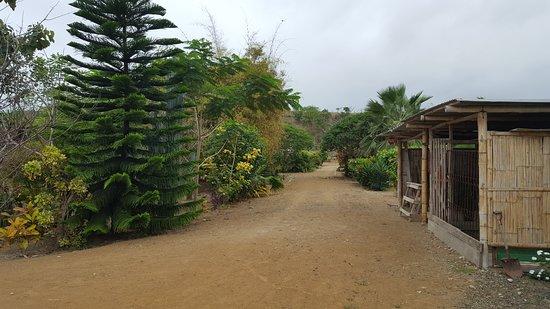 Puerto Cayo, Ecuador: view to rear of property
