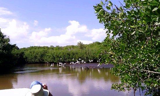 Mangroveman Charters