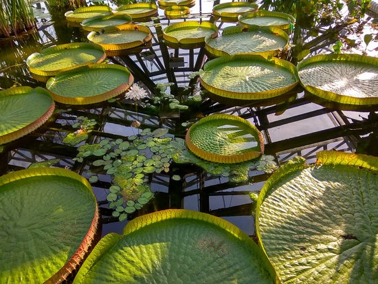 Img20180818180155hdrlargejpg Picture Of Botanischer Garten