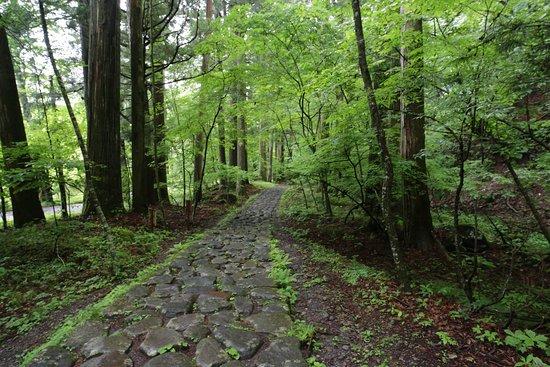 Takio Pathway