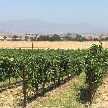 Kalyra Winery: photo2.jpg