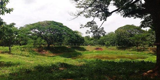 Banteay Chhmar, Камбоджа: Paysage à l'entrée du site