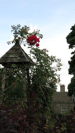 Miserden, UK: Roses a plenty...