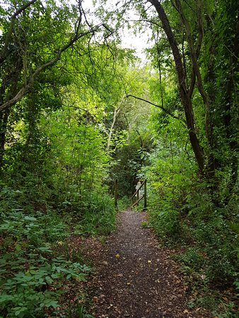 Dimmingsdale Nature Reserve: Paths