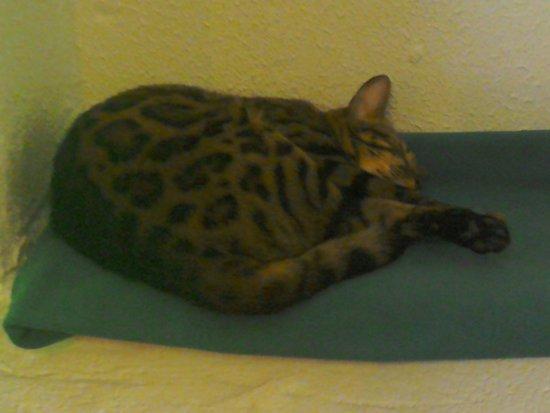 Leopard.