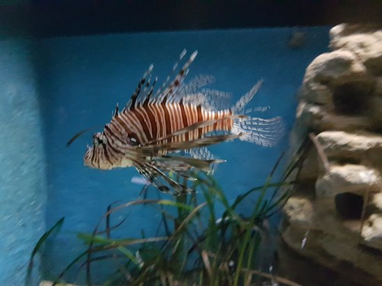 Фотография Критский морской аквариум
