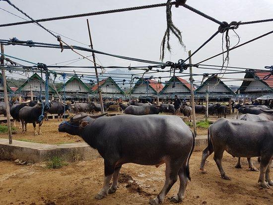 Toraja Tour Guide: Bolu Market