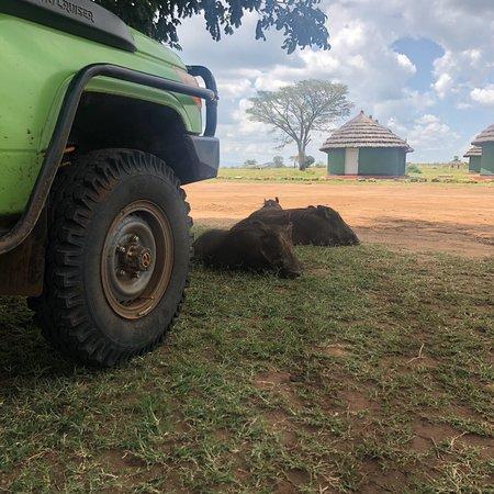 Kidepo Valley National Park, Uganda: De pumba's zijn hier kind aan huis
