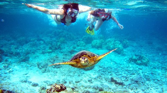Hopkins, Belize: Snorkeling-The Underwater World