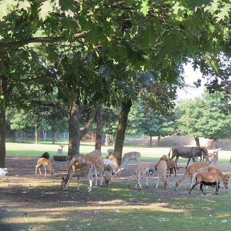 Parco Arcadia: Cerbiatti e c