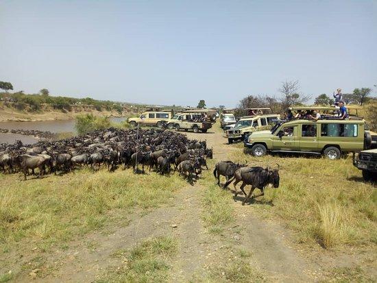 Tanzania Serengeti Adventure