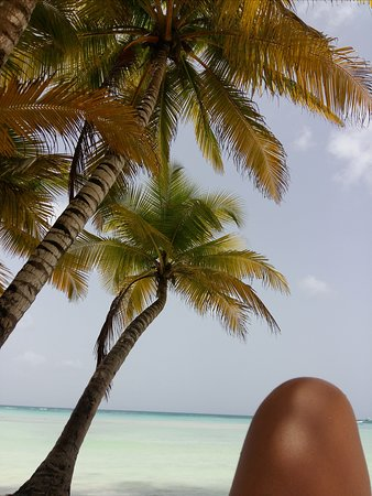 Excursion a la Isla Saona : Ilha Saona