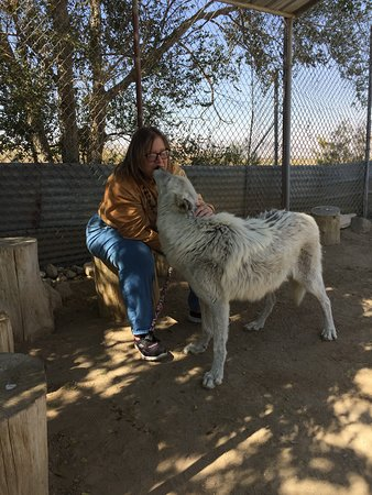 Lucerne Valley, Kalifornien: This is a sweet girl....again love and trust.....