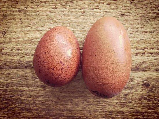 Keynsham, UK: Eggsellent
