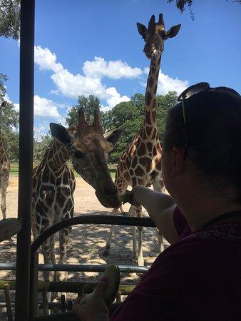 Фотография Giraffe Ranch