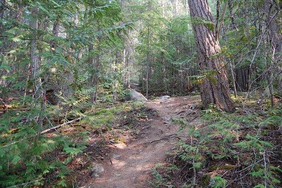 Birken, Canada: Hiking trail