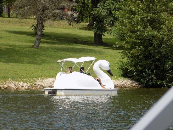 Swan Pedal Boat Picture Of Lake Logan State Park Tripadvisor