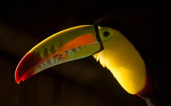 Minca, Colombia: Tuki nuestra mascota
