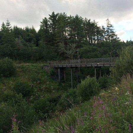 Dromahair, Ирландия: Killavoggy Bridge or Mick's bridge as we like to call it.