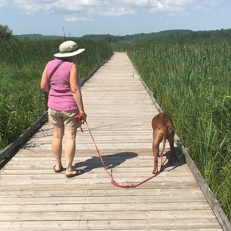 Spruce Bog Boardwalk Trail: photo0.jpg