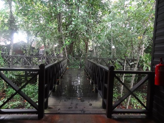Sukau, Malasia: The walkway from our Chalet - it was wet and raining