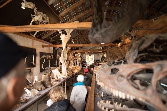 Musee du Squelette