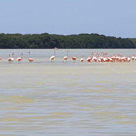 Flamingo Tours: photo3.jpg