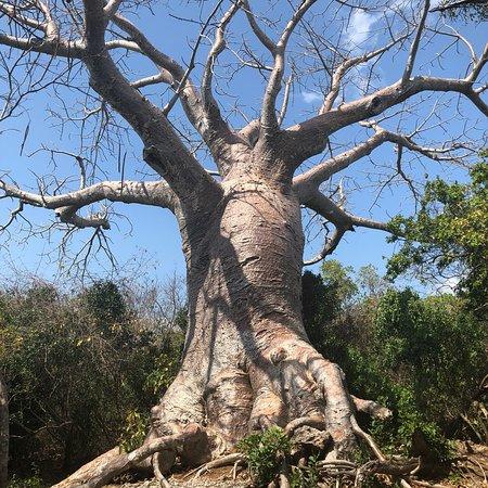 Quilalea, Mosambik: photo6.jpg