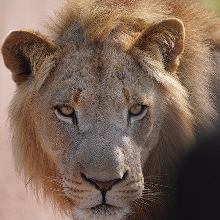 Hlane Royal National Park, Eswatini (Swaziland): photo0.jpg