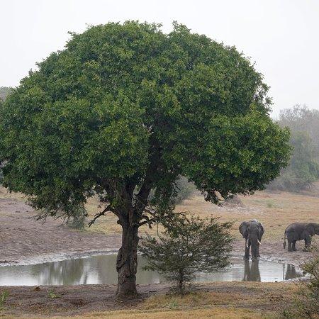 Tembe Elephant Park, แอฟริกาใต้: photo0.jpg