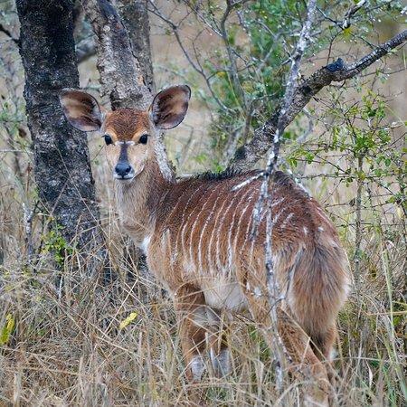 Tembe Elephant Park, แอฟริกาใต้: photo1.jpg