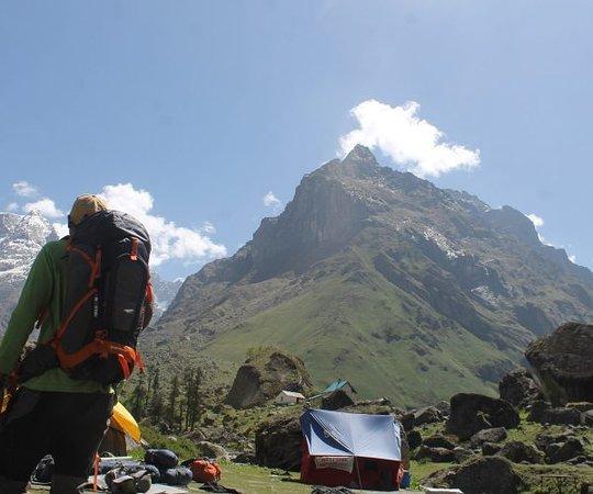 Himalayas Griffon