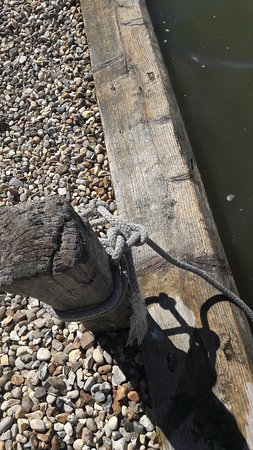 写真Waveney River Tours枚
