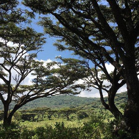 Lemala Ngorongoro Tented Camp: photo4.jpg