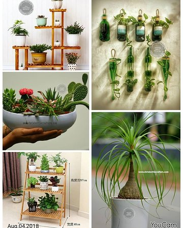 Muvattupuzha, Indie: Chris bottle Crafters indoor home garden
