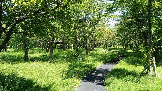 Toyohira Sakura no Mori Park