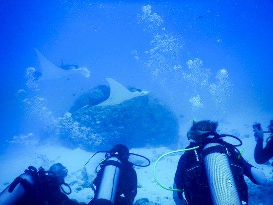 Maupiti Diving: Plongée avec les raies manta