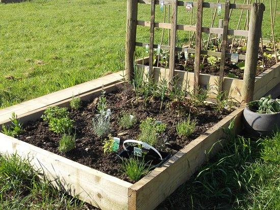 Carmarthenshire, UK: Herb garden to help yourselves.