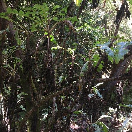 Parque Nacional del Garajonay: photo0.jpg