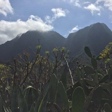Parque Nacional del Garajonay: photo2.jpg