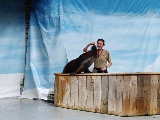 Antwerp Zoo (Dierentuin) : IMG_20180820_131548_large.jpg