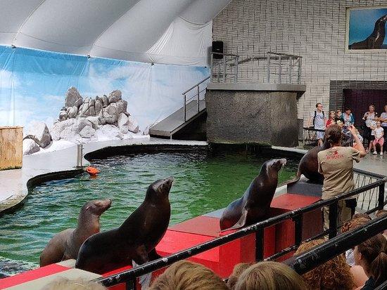 Antwerp Zoo (Dierentuin) : IMG_20180820_132418_large.jpg