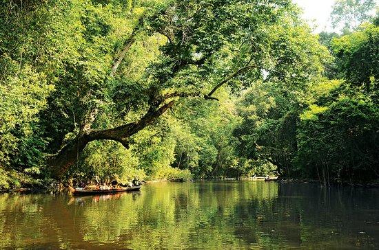 3-Day Taman Negara Adventure from...